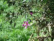 Flor na Unilivre
