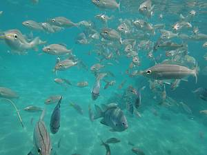 Maracajaú: Peixes por todos os lados!<br>