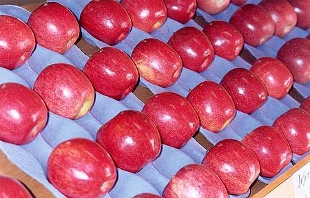 Festa da Maçã - Evento acontece durante a colheita, em abril