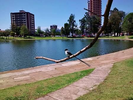 Lagoa das Lágrimas - Contemplação... um show da natureza em Guarapuava, PR !