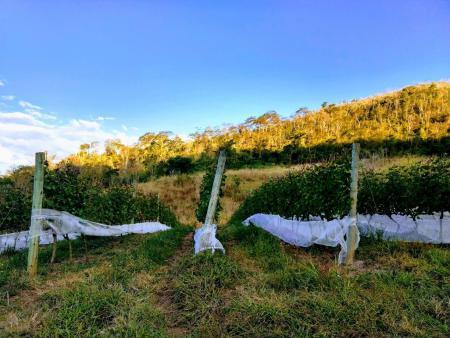48 horas em Araras, subdistrito de Petrópolis (RJ) - Vinhos podem ser degustados na propriedade