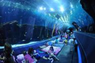 Dormindo no AquaRio