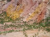 Falésias na praia de Coqueirinho