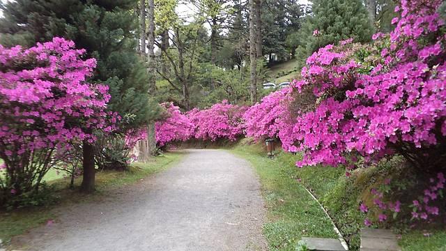 Um parque maravilhoso, repleto de flores e paz.
