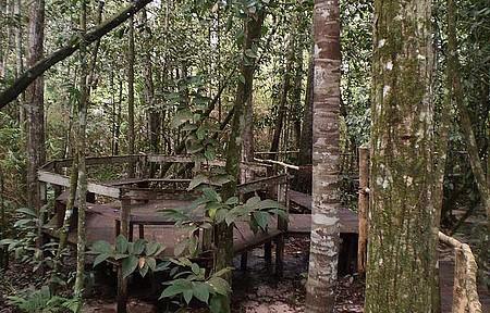 Jardim da Amazônia - Mais perto de Deus