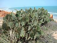 Vegetação conhecida como Cama de Sogra.