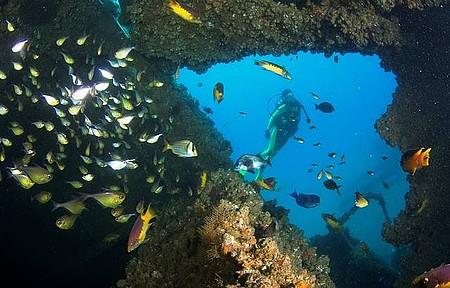 Mergulho - Naufrágios atraem peixes e mergulhdores