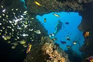 Naufrágios atraem peixes e mergulhdores