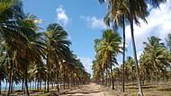 Caminho para a praia Pontal do Cupe