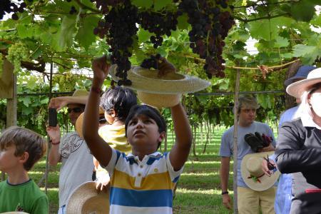Vindima: colheitas e brindes no Vale dos Vinhedos! - Garotada faz a festa durante a colheita na Villa Michelon!