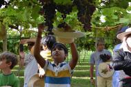Garotada faz a festa durante a colheita na Villa Michelon!