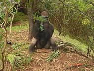 Macaco Muiito Comel�o