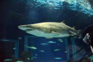 Julho é o mês dos tubarões!