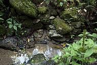 Nascentes têm águas limpinhas