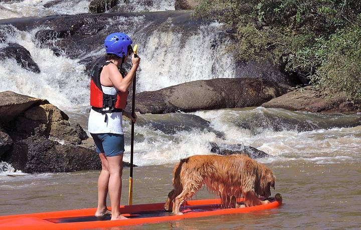 Cães acompanham os donos nas aventuras!