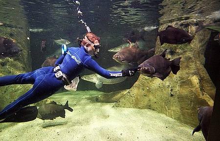 Acqua Mundo - Mergulhadores dão alimentos e carinho!