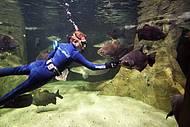 Mergulhadores dão alimentos e carinho!