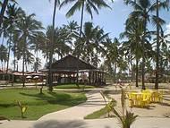 Belo coqueiral na praia de Maracaípe