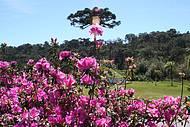 Entre as flores da primavera