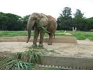 Elefante Bem de Perto. As crian�as adoram!