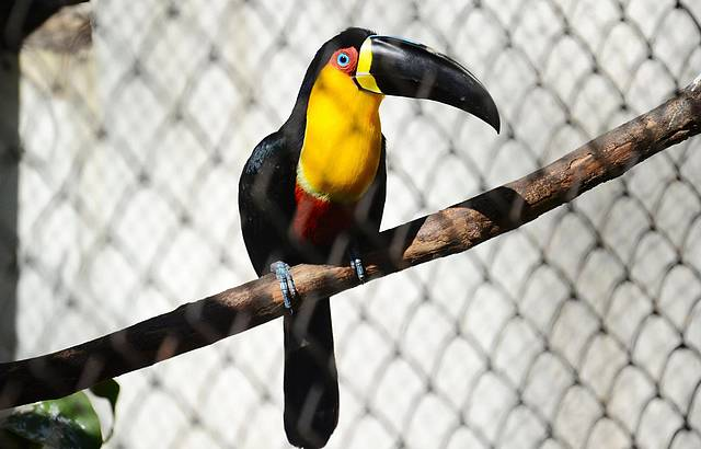 Zoológico do Rio é reaberto