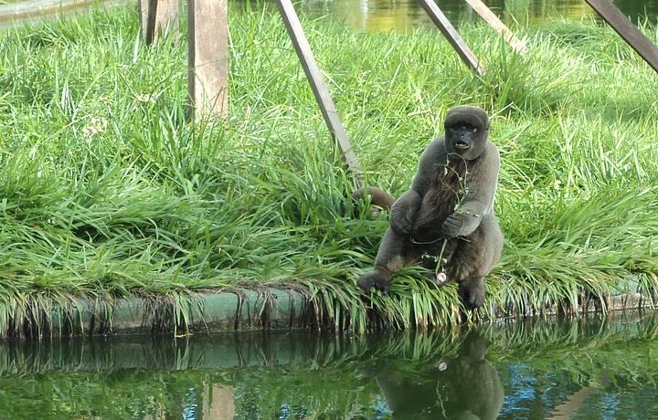 Macaco Fotogenico