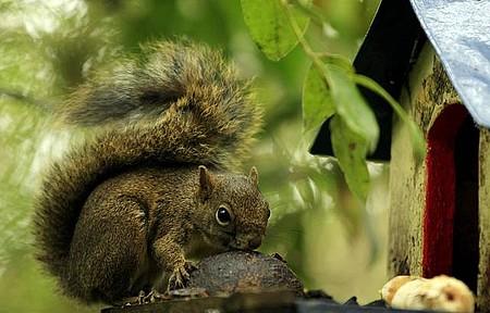 Horto Florestal - Serelepes sempre fazem graça!