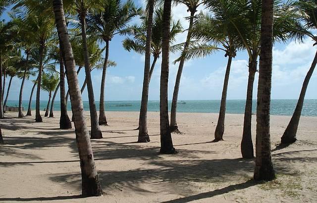 Coqueiros na praia. O para�so!