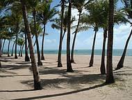 Coqueiros na praia. O paraíso!