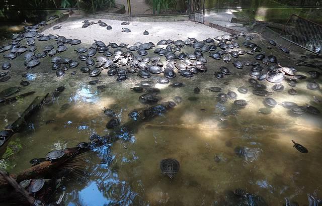 Parque Emílio Goeldi