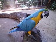 A arara azul, um dos animais que mais tem a cara do Brasil