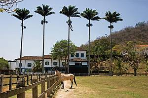 Fazenda Ponte Alta: Propriedade preserva arquitetura e costumes -