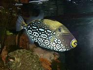 Cada peixe mais lindo que outro