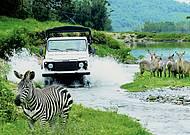 Veículos adaptados permitem observar os animais
