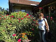 Rosas lindas da dona Elizabeta