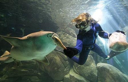 Acqua Mundo - Tubarões também ganham comida na boca