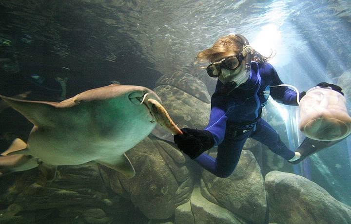 Tubarões também ganham comida na boca