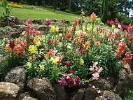 Passeio entre as flores