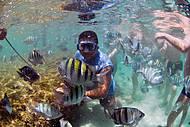 Nadando com Peixes