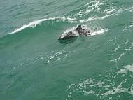 Passeio de escuna, seguido por golfinhos.