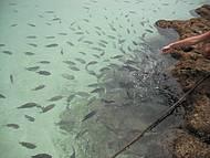Muitos peixinhos.
