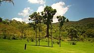 Uma árvore suspensa ?