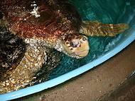 Tartarugas dão show no Projeto Tamar