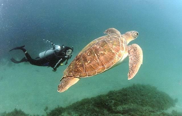 Animais marinhos de variadas espécies são observados na reserva ambiental