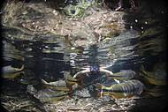 Ressurgência divide a atenção com os peixes coloridos