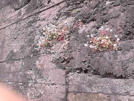 Serra da Piedade - As flores aparecem