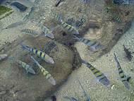 Peixes na praia da Lagoinha