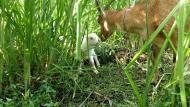 Vivências incluem conhecer o dia a dia da fazenda