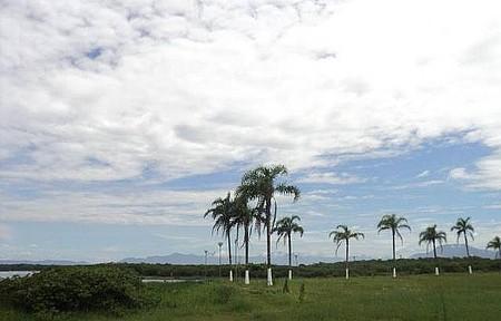 Praia da Juréia - Barra do Ribeira - Coqueiros Próximo a Balsa