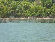 Pesca de Tarrafa , vila de pescadores na Gamboa do Morro